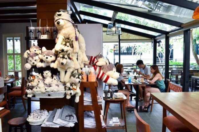 Лающее кафе Бангкока – обязательное место для любителей собак