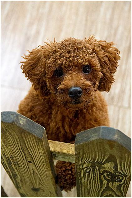 Южнокорейское заведение Dog Cafe - ответ японским рестораторам.
