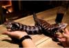 Вьетнамский ресторан Pet Café - популярное место отдыха для любителей змей, ящериц и пауков