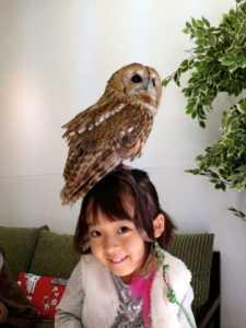 Сова, Япония, owl