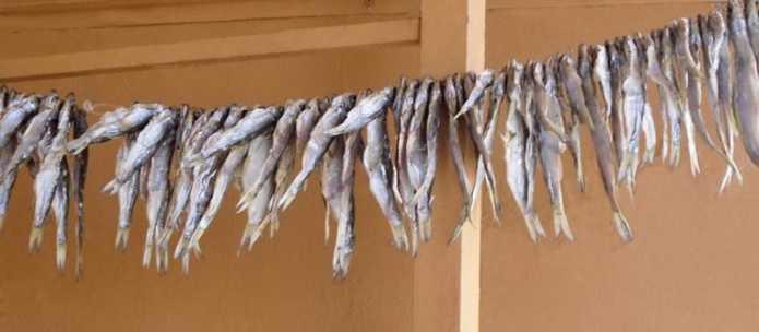 Засушить рыбу