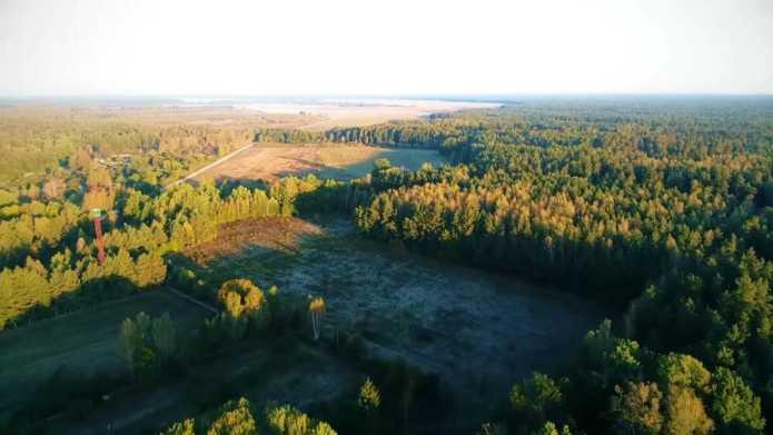 Леса Белоруссии