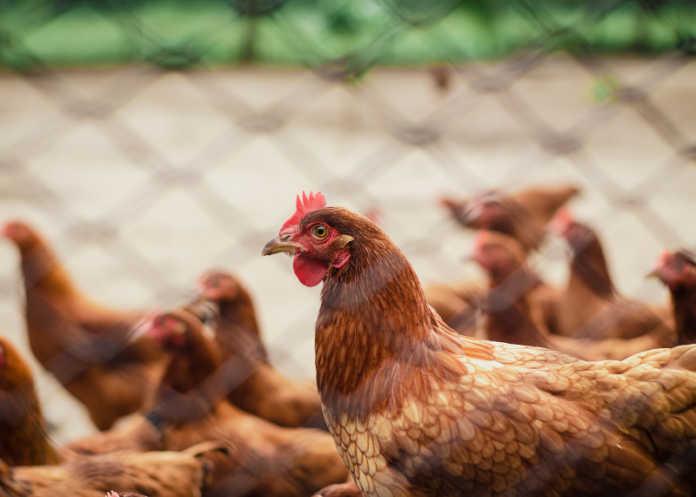 Россельхознадзор расширил перечень предприятий Республики Беларусь, временно лишенных права на экспорт продукции животноводства в Россию.