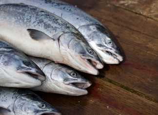 КНР не справляется с обязательствами по закупке рыбы и морепродуктов у Соединенных Штатов в рамках первой фазы торговой сделки, отмечают американские аналитики.