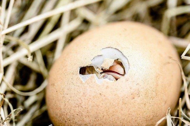 Отказаться от электронных тендеров по продаже яиц и вернуться к поставкам по прямым контрактам предложили производителям птицеводческой продукции в Минсельхозе.